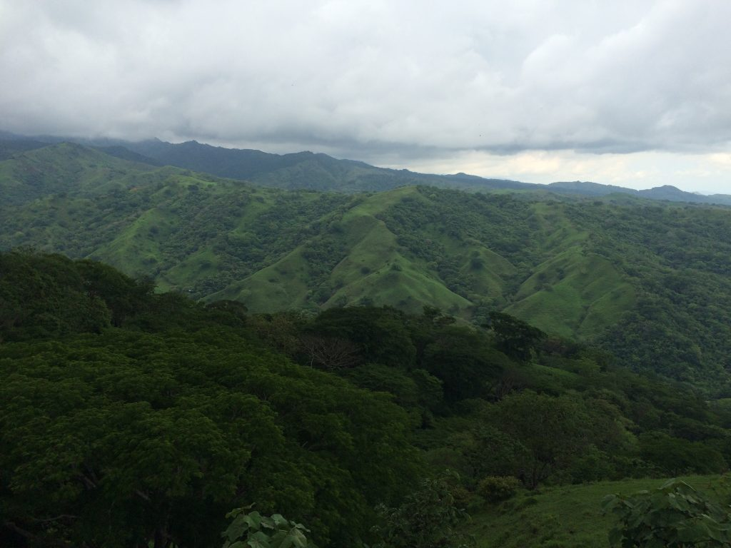 costa_jungle_2